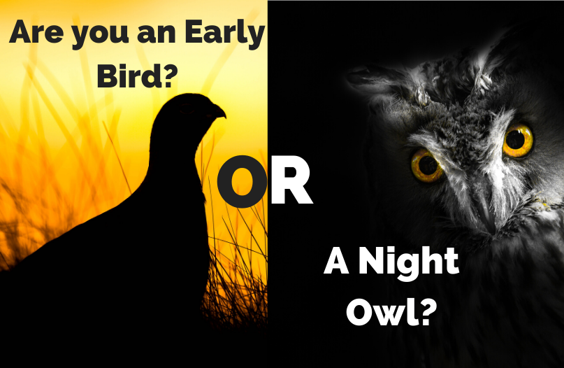 Are you a night owl or a early bird?