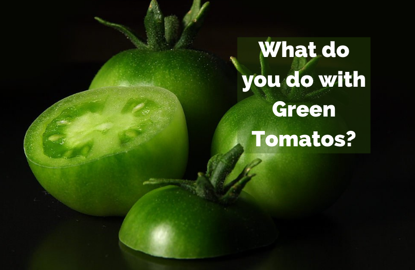 Fry 'em? Green Salsa? What do YOU do with Green Tomatoes?